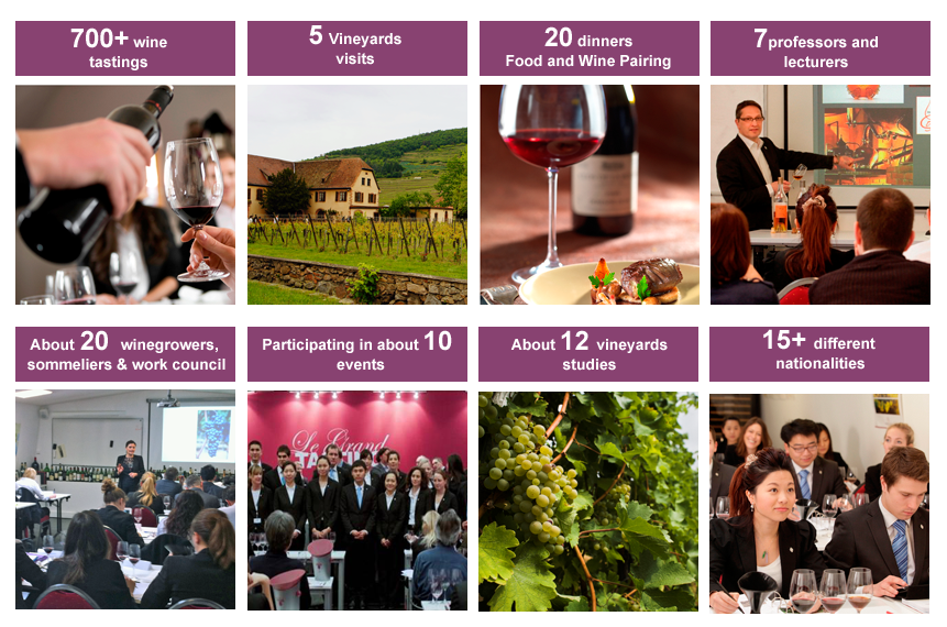 Wine and Management Program key figures