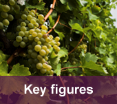 Wine and Management Program key figures