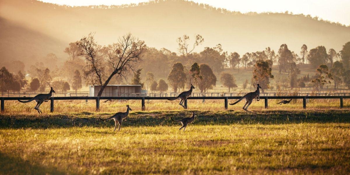 Hunter Valley, NSW