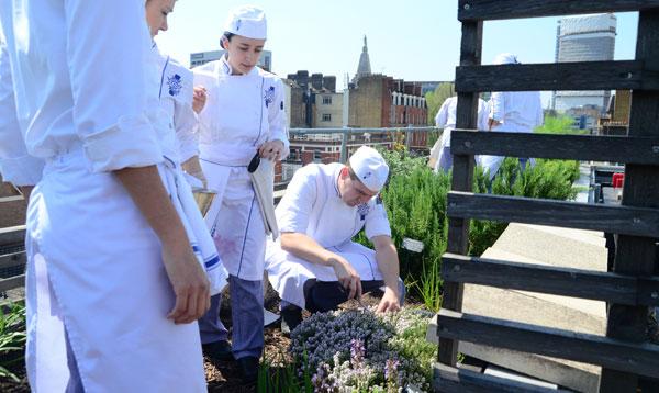 rooftop garden at le cordon bleu london